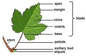 leaf leaf jpg leaf blower parts diagram at edmiracle.co
